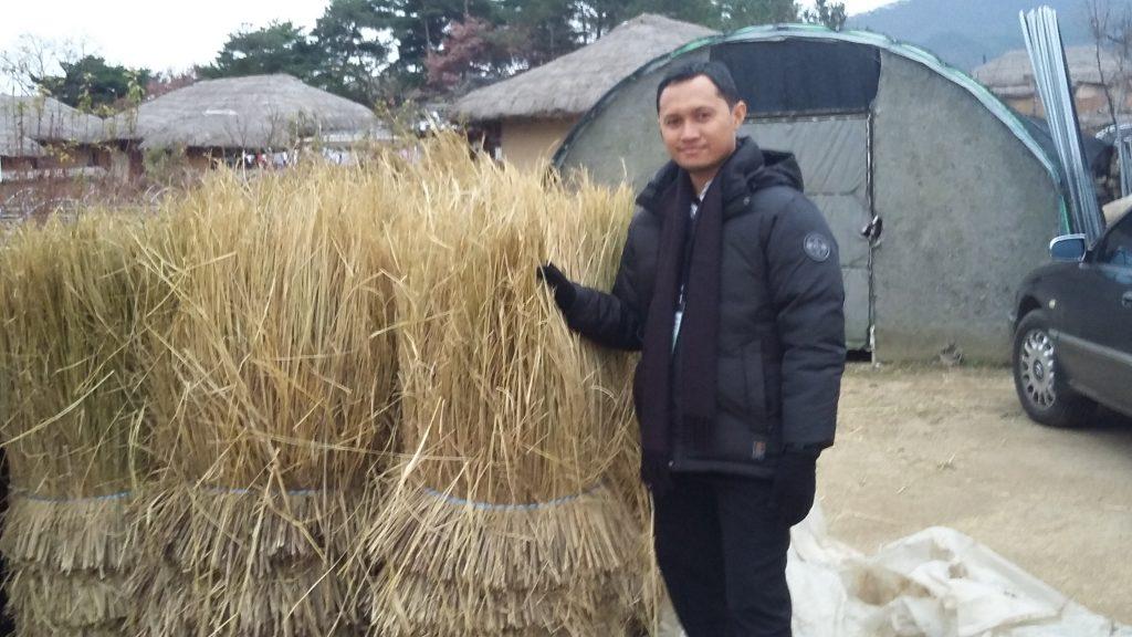 Jerami dari hasil pertanian